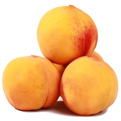 【順豐配送】現摘新鮮黃桃5斤 桃子 毛桃 新鮮水果