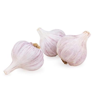 【鮮食無憂】山東紫皮大蒜 自然晾干 產地直發 1斤裝 (5件合發1件凈重5斤裝 5的倍數件發貨)新鮮蔬菜 詩亦