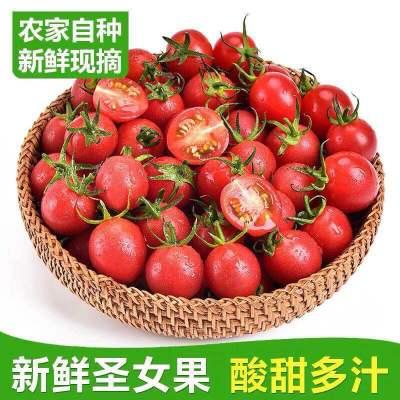 【5斤裝】正宗千禧圣女果新鮮水果農家自種番茄小西紅柿凈重4.4-5斤(以凈重為準)