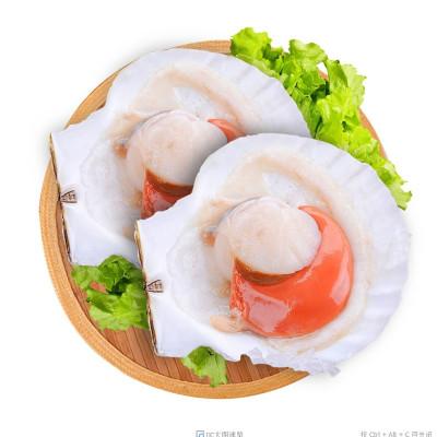 怡鲜来 大连冷冻虾夷半壳扇贝600g 5-7只 生鲜贝类 烧烤食材