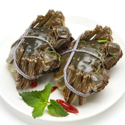 全母蟹買8只送6只共14只六月黃童子蟹1.2兩-1.4兩大閘蟹鮮活螃蟹六月黃面拖蟹香辣蟹