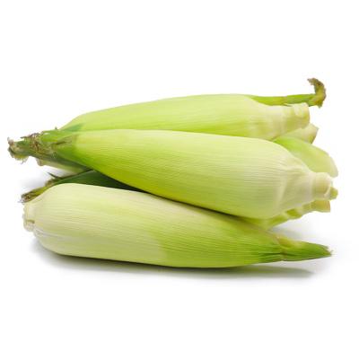 【現發貨】百寶源云南水果玉米5斤裝 口感香甜 新鮮玉米 清香可口營養豐富 可以生吃的玉米