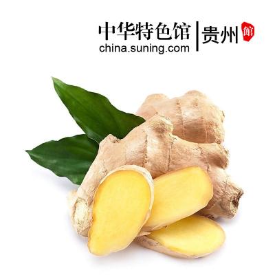 【中华特色】贵州馆 小黄姜3斤装生姜老姜调味生鲜食材新鲜蔬菜 西南