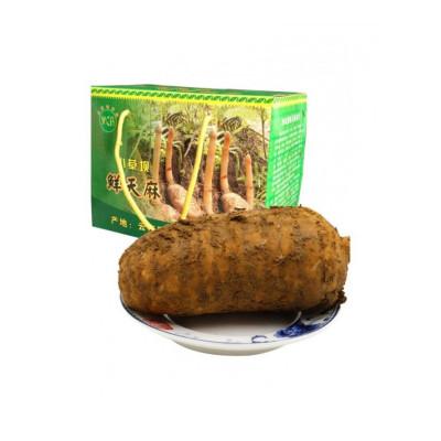 博多客 云南昭通小坝天麻2kg新鲜仿野生鲜天麻中秋送礼礼盒装生鲜新鲜 约40个