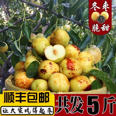 冬棗凈重5斤 沾化冬棗新鮮水果鮮棗甜脆棗非大荔冬棗