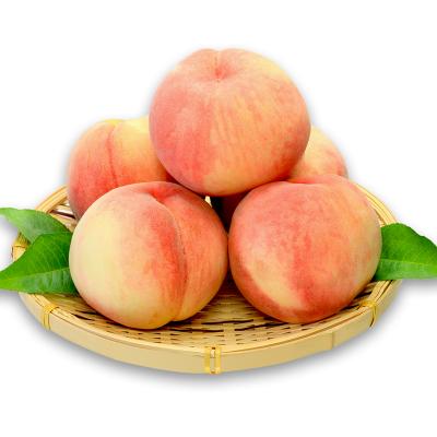 果貴緣 水蜜桃 桃子水果新鮮蒙陰蜜桃 批發當季新鮮水果禮盒 凈含量2500g