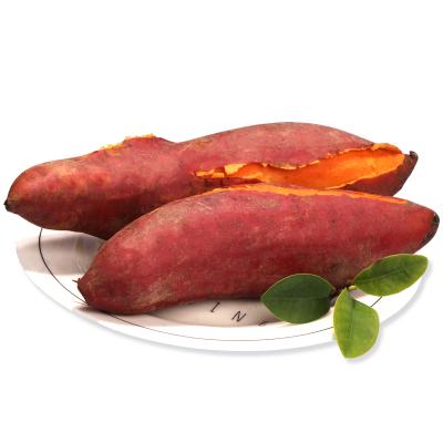 薯家上品 精品大果六鰲沙地紅薯5斤 農家自種紅蜜薯新鮮蔬菜現挖地瓜紅心番薯