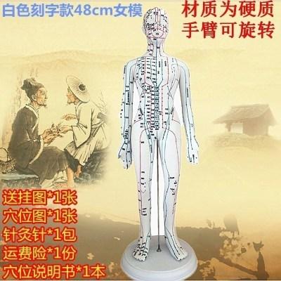 所走勢走向筋脈保健理療刮痧男性女性人體模型經絡穴位圖拔罐 白色款【48cm女模】手臂可轉硬