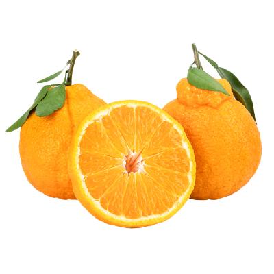 四川丑橘不知火【精裝中果 果徑70-80mm】凈重2.5斤 丑柑丑八怪丑橘丑桔子新鮮水果 眉山