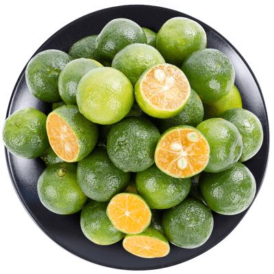 海南小青橘5斤 小青金桔 新鮮水果 夏日解暑
