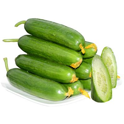 水果小黃瓜2.5斤現摘小青瓜 無刺黃瓜山東特產蔬菜沙拉菜新鮮蔬菜