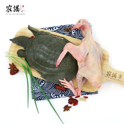 农谣 新鲜鸽子肉炖 甲鱼 传统名菜【沉鱼落雁】现杀散养乳鸽 甲鱼