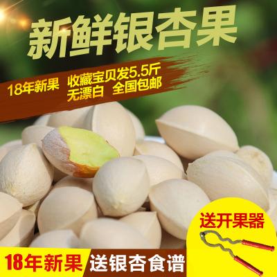 【5.5斤裝】新鮮銀杏果 白果優質大佛指 邳州特產送開果器和食譜