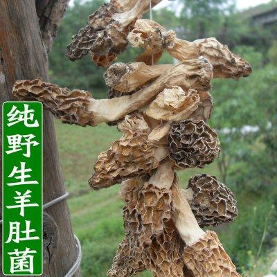 纯野生羊肚菌神农架深山自采羊肚菌天然羊肚蘑食用菌干货蘑菇50克