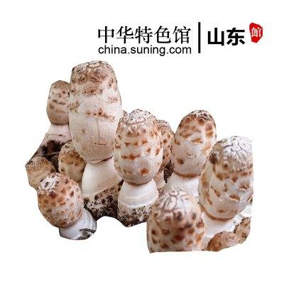【中华特色】山东馆 鸡腿菇菌菇包 食用菌棒菌包 菌种种子多肉植物阳台蘑菇种植菌包