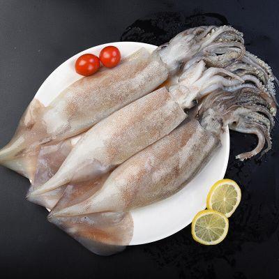 【鮮魷魚】整只 大魷魚 冷凍 冰鮮 海產魷魚 燒烤 海鮮水產類 新鮮 軟足食材 年貨節 新鮮魷魚 約5斤裝