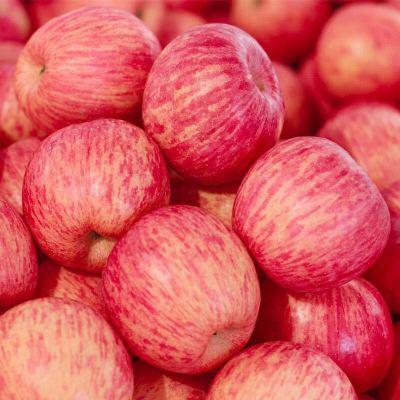 桔緣山東煙臺棲霞紅富士蘋果 新鮮脆甜多汁5斤 冰糖心蘋果新鮮水果果徑70mm-90mm