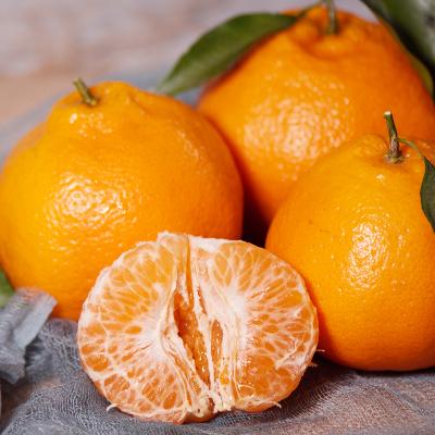 新鲜现摘春见耙耙柑大果8斤装自家果园直供自营生鲜水果