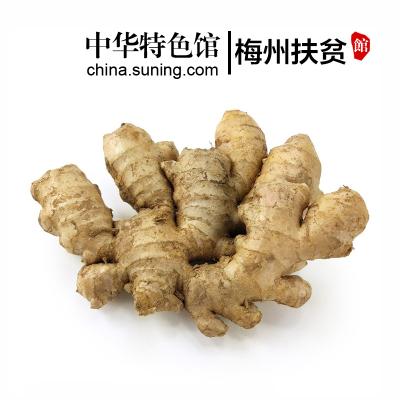 【中華特色】梅州扶貧館 黃姜 生姜 農家鮮姜 月子姜 老姜 新鮮蔬菜調味品 500g 1斤裝 華南