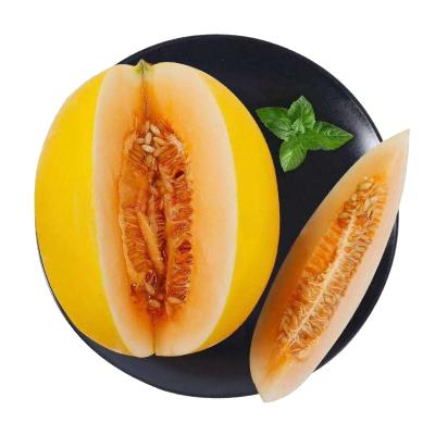 新鮮黃河蜜瓜 5斤含箱 甜瓜 黃金蜜瓜 新鮮水果 蘇寧生鮮水果 陳小四水果