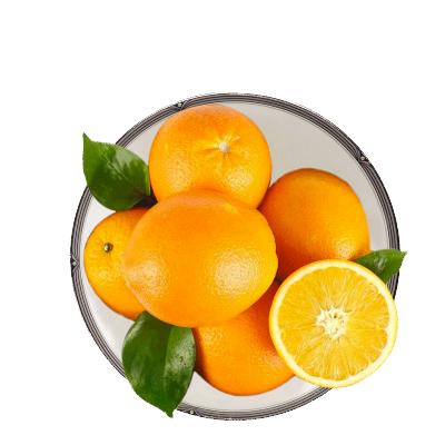 【年后2月5日发货】苗家十八洞 湘西保靖脐橙5斤装 单果果径60-65mm左右 脆甜爽口时令鲜果