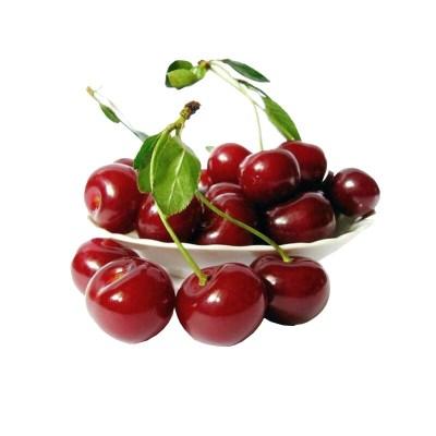 进口水果智利车厘子单J果1000克装 新鲜水果