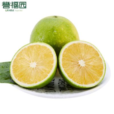 云南哀牢山冰糖橙新鮮橙子新鮮時令當季水果甜橙 5斤