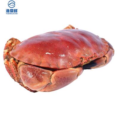 漁鼎鮮冷凍英國愛爾蘭黃金蟹一個裝面包蟹蟹黃豐滿海鮮水產600-800g