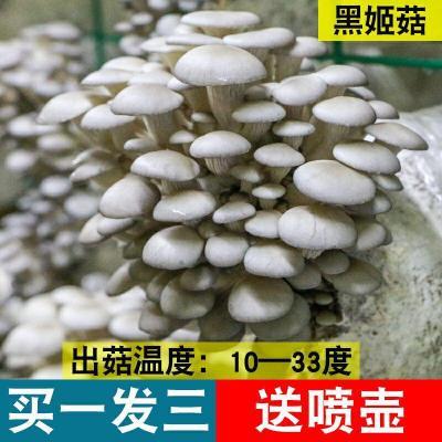 【拍2份9折】3包蘑菇菌包蘑菇種植包平菇菌棒香菇菌種菇種家庭食用菌