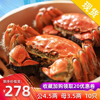 阳澄湖镇超大鲜活大闸蟹全公母蟹特大鲜活螃蟹公4.5两母3.5两10只