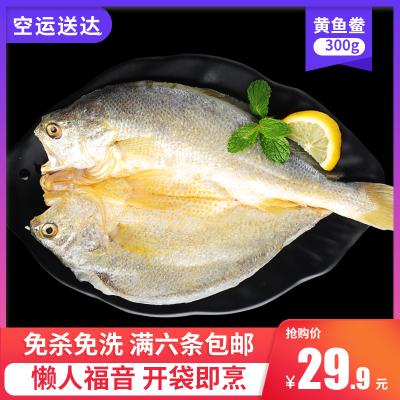 三都港醇香黃魚鲞 大黃魚黃花魚冷凍水產生鮮新鮮免殺洗干300g條
