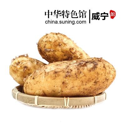 【中华特色】威宁馆 浓忆甜源 新鲜黄皮黄心大土豆农家新鲜蔬菜地标产品马铃薯 5斤装 西南