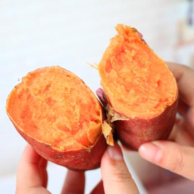 福建六鳌红薯2.5斤