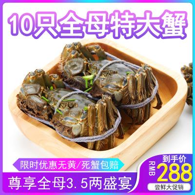 10只全母大闸蟹鲜活苏州阳澄湖镇餐中王3.5两大规格螃蟹水产
