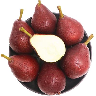 红啤梨5斤 梨子 吃软不吃硬 可以用吸管喝的梨 新鲜水果