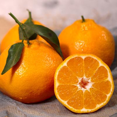 鮮菓籃 新鮮現摘春見耙耙柑 帶箱10斤裝大果 果園直發 現摘現發 生鮮水果