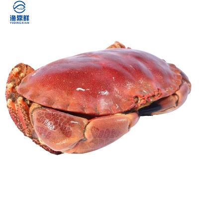 渔鼎鲜冷冻英国爱尔兰黄金蟹一个装面包蟹蟹黄丰满海鲜水产600-800g
