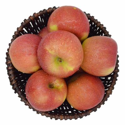 陜西膜袋紅富士蘋果 中果 單果果徑70-80mm 帶箱9-10斤 新鮮蘋果 冷藏國產蘋果類 新鮮水果 陳小四水果 其他