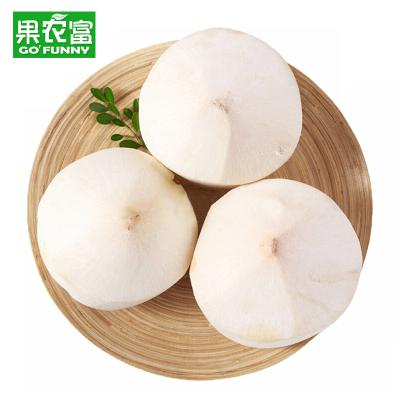 果農富 海南大椰青 4個 單果約1-1.5kg 熱帶新鮮水果香椰去皮椰子青椰子嫩椰子